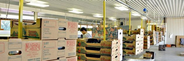 Improve Efficiency in Fruit Packing Operations